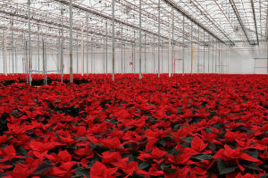 Your Poinsettia Suppliers image